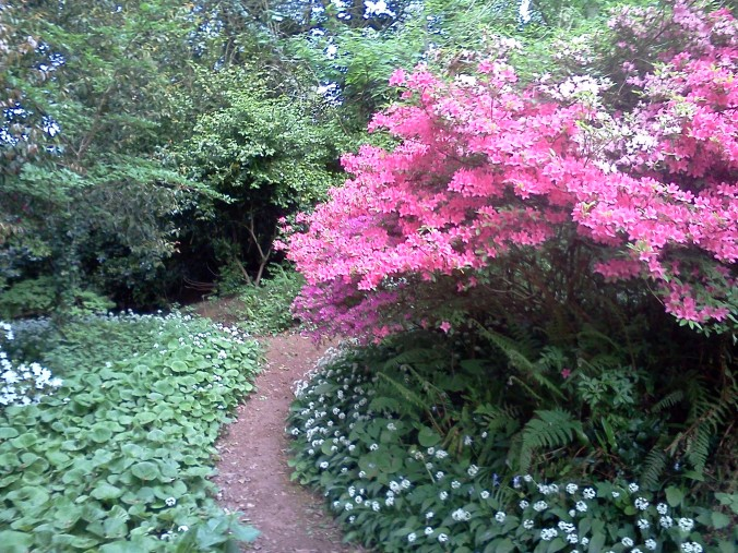 A Cockington garden path